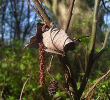 Curled Leaf by Fury Iowa-Jones