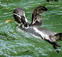 Penguin Wave by Linda Long