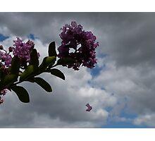 Floating petal Photographic Print