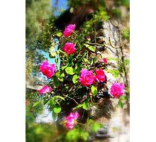 Rose Bower Photographic Print