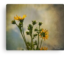 janet lee photography Canvas Print