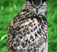 Eagle Owl 2 by Chris Day