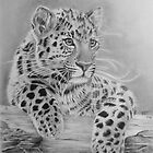Leopard cub by Ed Teasdale