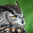 Eagle Owl 3 by Chris Day