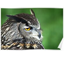 Eagle Owl 3 Poster