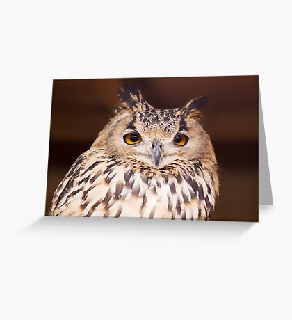 Bit Of A Hoot Greeting Card