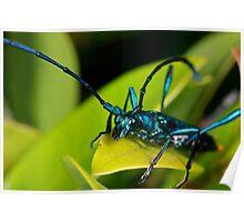 Emerald Longhorn Beetle (3) Poster