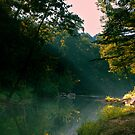 Roupes Creek in the Morning by Phillip M. Burrow