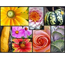 Gardener's Delight Photographic Print