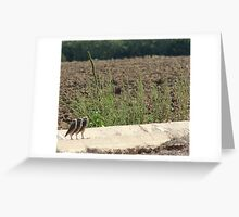 "Burrowing Owls ""The Three Amigos"" Greeting Card"