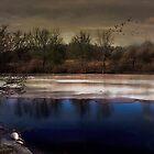 Frozen by Judi Taylor