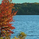 Fall at Lake Wappepello by Susan Blevins