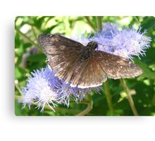 Butterfly ~ Funereal Duskywing Canvas Print