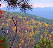 Ozark Mountains National Forest, Arkansas by David  Hughes