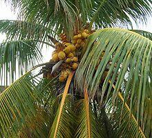 Sprawling Palm-With Cocos by Swan Diaz