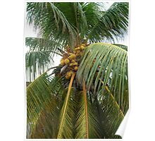 Sprawling Palm-With Cocos Poster
