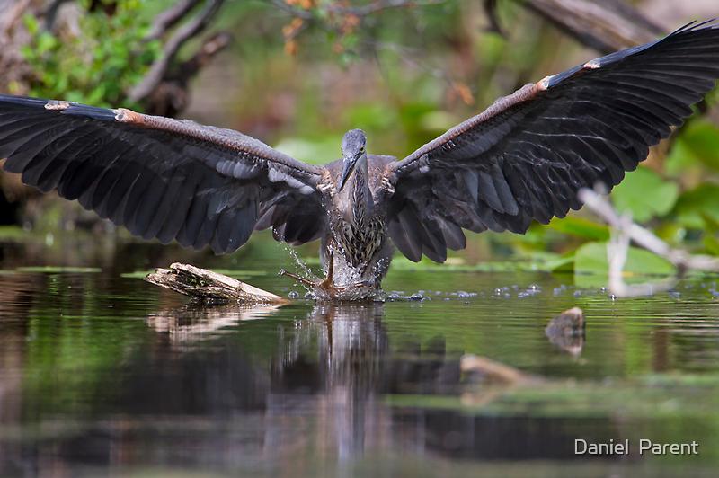Making a Splash  by Daniel  Parent