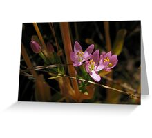 Delicate Touch Greeting Card