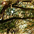 Branches - Leaves - Moss & Sky by Roger Sampson