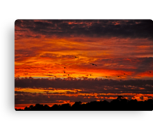 Searching for Rest Canvas Print