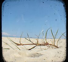 Grassy Dunes - TTV #4 by Kitsmumma