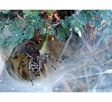 Funnel Web Spider Photographic Print