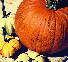 Pumpkin and Squash by OneDayOneImage Photography