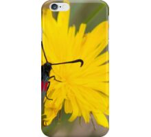 Six spot Burnett Moth iPhone Case/Skin
