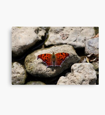 Question Mark - Butterfly Canvas Print