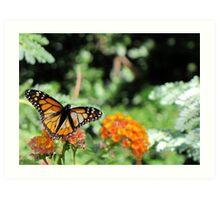 Butterfly ~ Monarch Butterfly Art Print