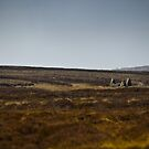 The Old Crofter's Cottage by ElviraTSquirrel