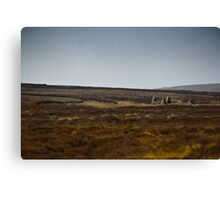 The Old Crofter's Cottage Canvas Print