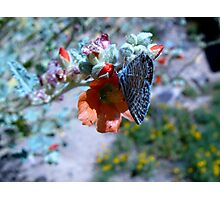 Butterfly ~ Marine Blue Photographic Print