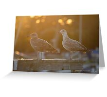Two Young Seagulls | Center Moriches, New York  Greeting Card