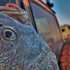 Catch Of The Day - HDR by Heather Linfoot