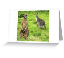 soggy kangaroos Greeting Card