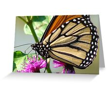 Monarch Up Close and Personal Greeting Card