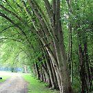 Trees, Trees, Trees by teresa731