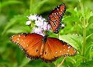 Pollination Series ~ 5 by Kimberly Chadwick
