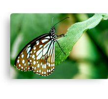 Green Butterfly!! Canvas Print