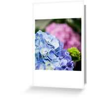 Blue and Pink Hydrangeas Greeting Card