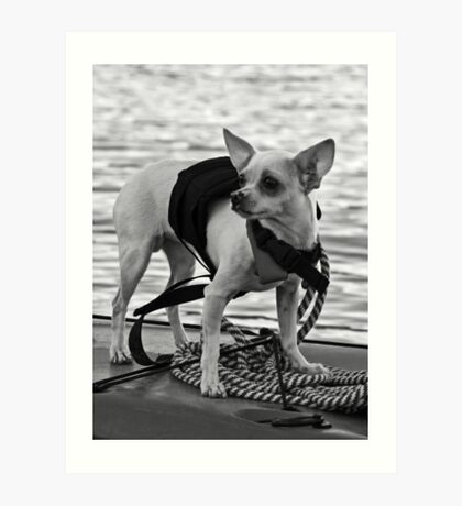 Chihuahua and the Boating Safety Message Art Print
