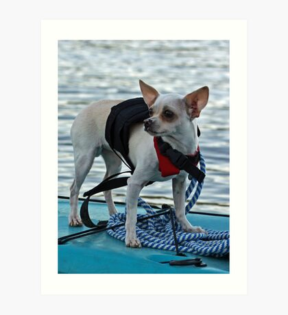 Chihuahua and the Boating Safety Message (in Color) Art Print