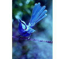 Look up Bluey Photographic Print