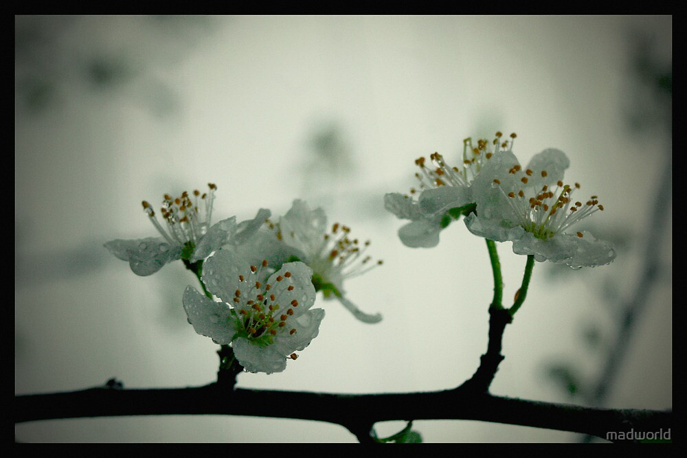 Spring, the season of new beginnings and forgiveness by madworld