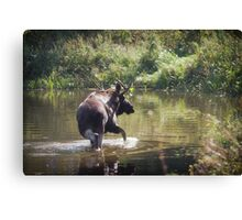Moose in Forest Lake Canvas Print