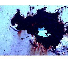 bovine Photographic Print