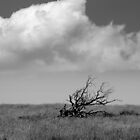 Skeletal Tree by YorkshireMonkey