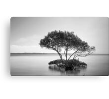 The Mangrove Tree Canvas Print