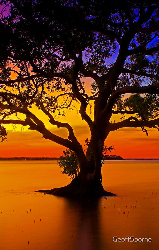 Mangrove Tree by GeoffSporne